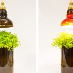 Company-Makes-Funky-Lamps-from-Recycled-Glass-Bottles-Video