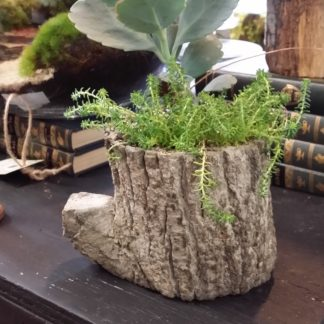 succulent cement planter