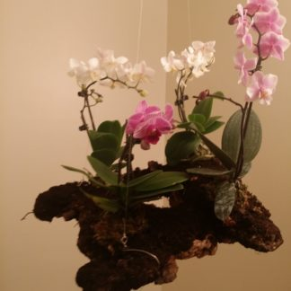 hanging orchid planter pot
