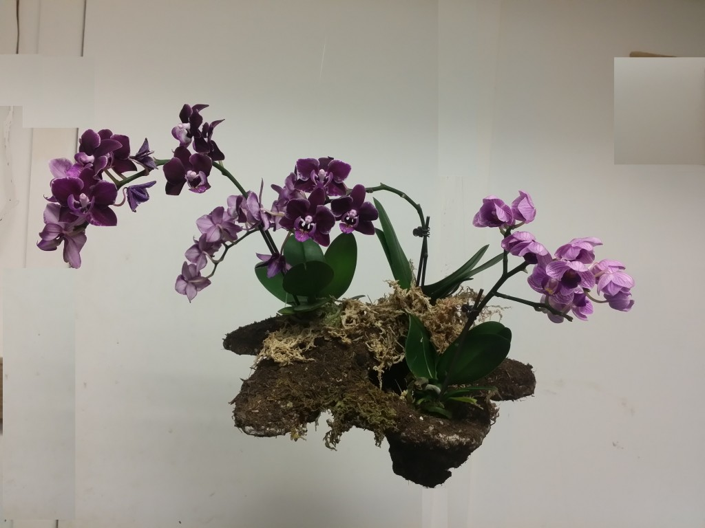 4 pot orchid mountain