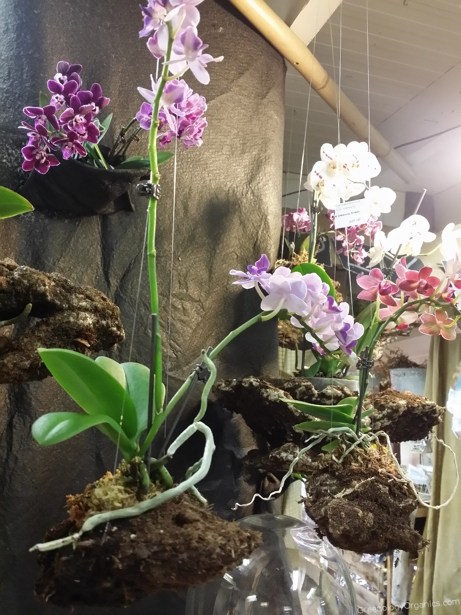Hanging Orchid Pots Home Decorating Ideas Interior Design