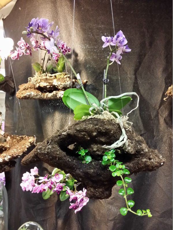 Double Tiered Floating Mini Orchid Pot Greenology Organic Living