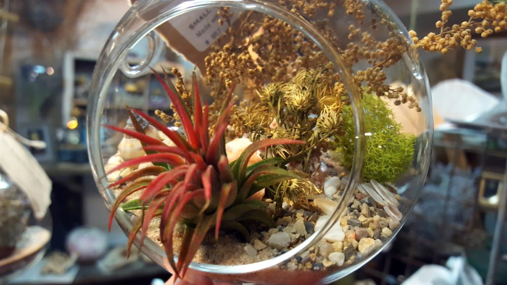 here are some of the new air plant terrarium in the shop