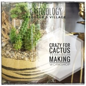 Crazy for Cactus Terrarium Making Workshop @ Greenology Organic Living Peddler's Village